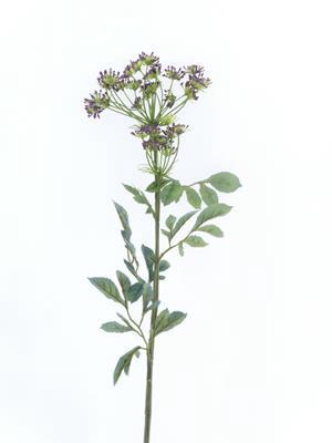 <h4>Af Bishops Flower Spray 76cm P</h4>