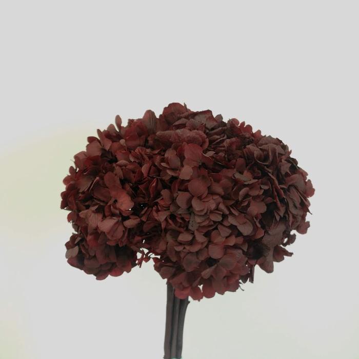 <h4>Hortensia burdeos preservada</h4>