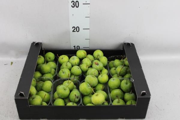 <h4>Fruit & kruiden   ...L%</h4>