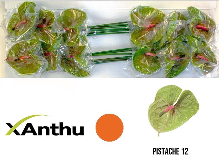 <h4>ANTH A PISTACHE</h4>