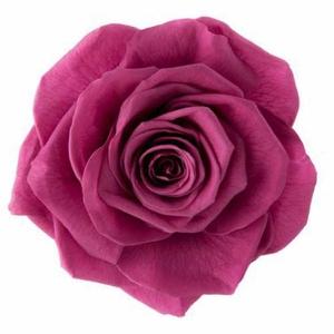 Rose Monalisa Rose Wine