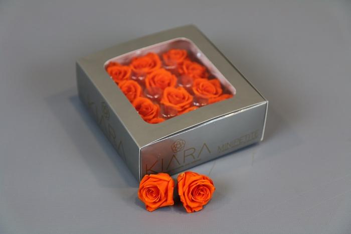 <h4>Rosa Preserved Orange Flame Mini Petite</h4>