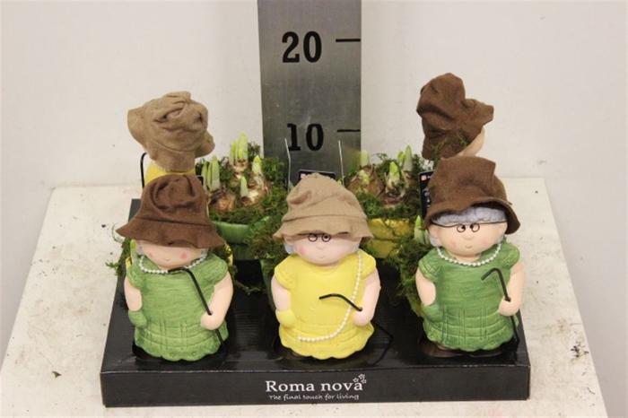 <h4>Arr Narcisse 989 - Granny (tete A Tete)</h4>