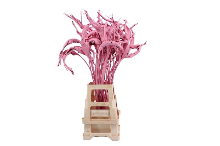 <h4>Strelitzia Pink</h4>