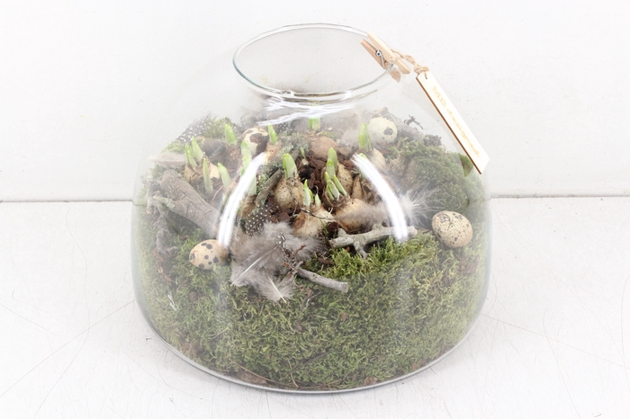 <h4>arr.. Narcis MB - Glas cupula L</h4>