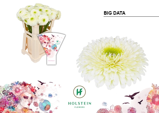 <h4>GE GBV hoes Big Data</h4>