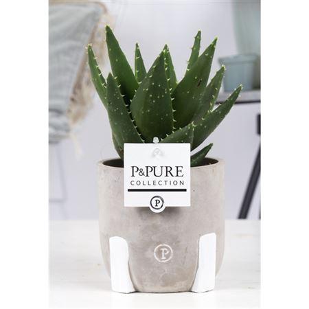 <h4>Aloe Mitriformis Keramiek Jade Iii</h4>