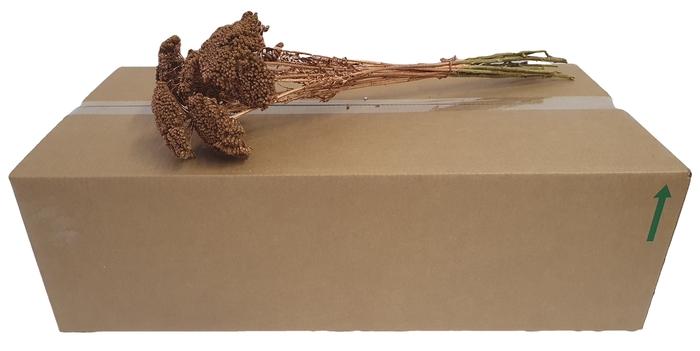 <h4>Achillea per stem Copper</h4>