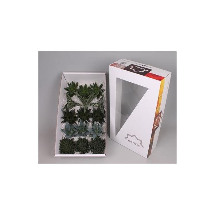 <h4>Aloe Ov</h4>
