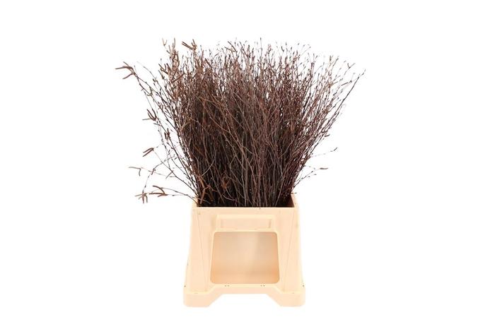 <h4>Berk ( Birch ) Natural 60</h4>