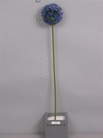 <h4>Echinops spray Quanna 64cm blue</h4>