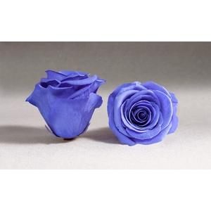 Rose stab. XL Vio-01
