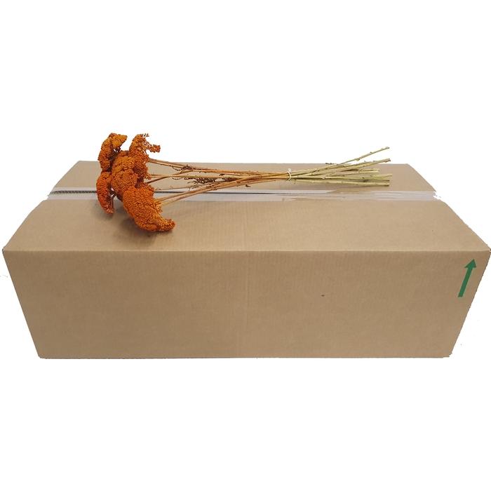 <h4>Achillea per stem Orange</h4>