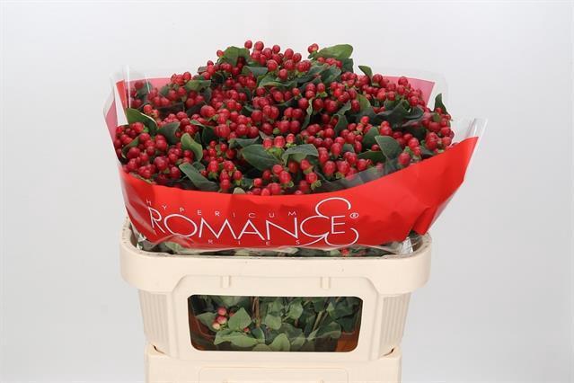 <h4>HYP TRUE ROMANCE</h4>