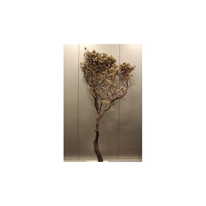 <h4>Manzanita Natural 210cm</h4>