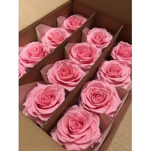 Rose on stem xl bulk 55cm pink