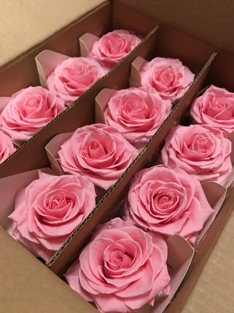 Rose on stem xl bulk 55cm pink