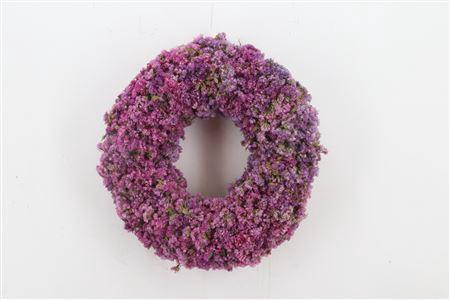<h4>Wr Pink Sensation 35cm</h4>
