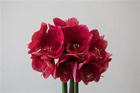 <h4>Hipp St Lilac Favour</h4>