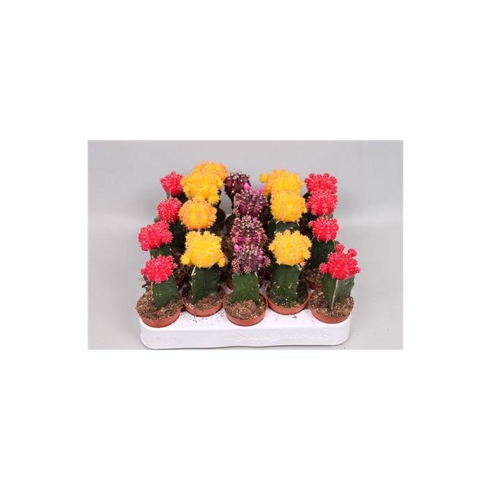 <h4>Cactus Gem</h4>