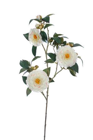 <h4>Camellia spray x3 Camden h85 cream</h4>