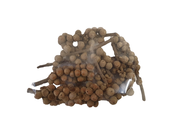<h4>Acorn bunch 250gr in poly Naturel</h4>