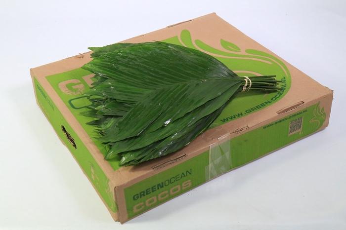 <h4>Cocos Medium Green Ocean</h4>