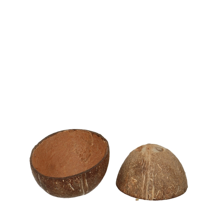<h4>Droogvrucht Kokosnoot open 12cm</h4>