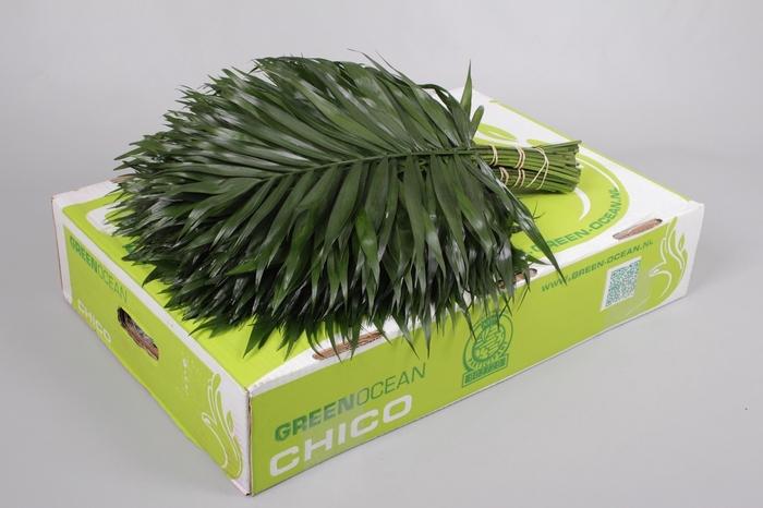 <h4>Chico Jumbo Green Ocean</h4>