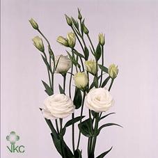 Lisianthus du Rosita White