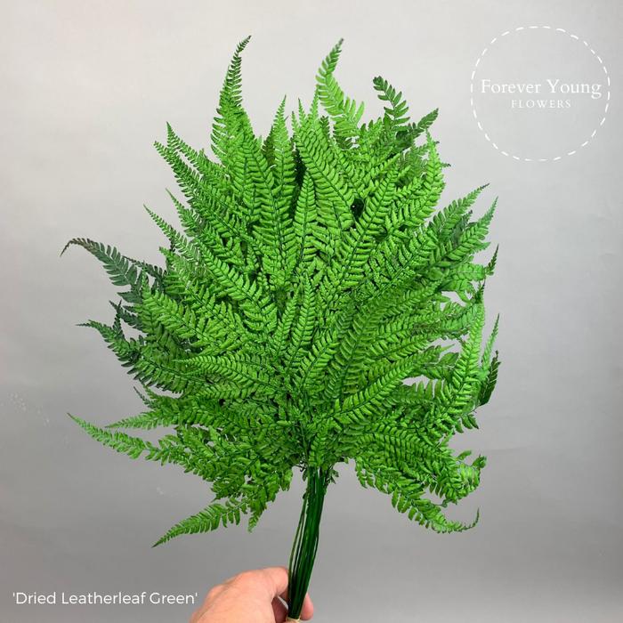 <h4>Dried Leatherleaf Green</h4>