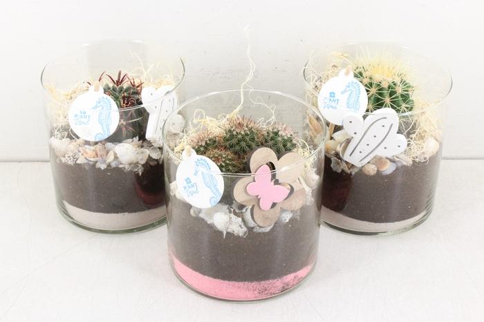 <h4>arr.. Cactus PL - Glas cilinder</h4>