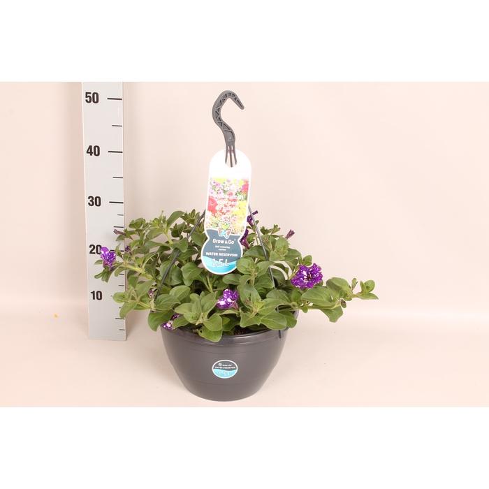 <h4>Hangpotten 27 waterreservoir Petunia Night Sky</h4>