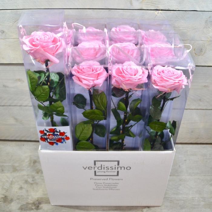 <h4>R PR Amorosa Premium Pink XXL</h4>