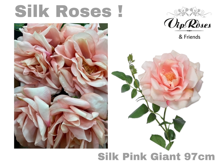 <h4>SILK PINK GIANT</h4>