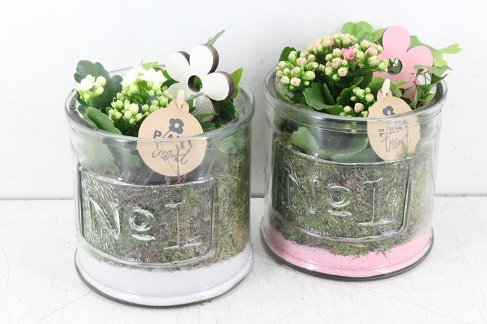 arr. PL - Glas pot No1 - roze/wit