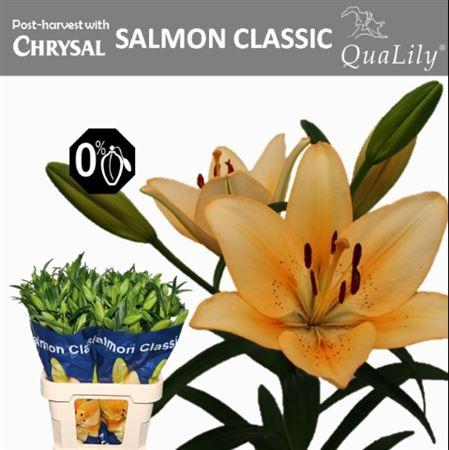 <h4>LI LA SALMON CLASSIC 5</h4>