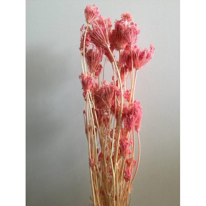 <h4>DRIED FLOWERS - FINOCCHIO VENKEL LIGHTPINK 100GR</h4>