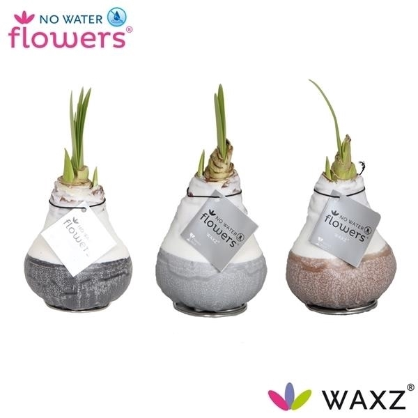 <h4>No Water Flowers Waxz® Dipz Natural</h4>