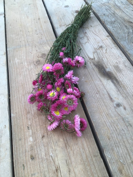 <h4>DRIED ACROCLINIUM PINK BUNCH</h4>