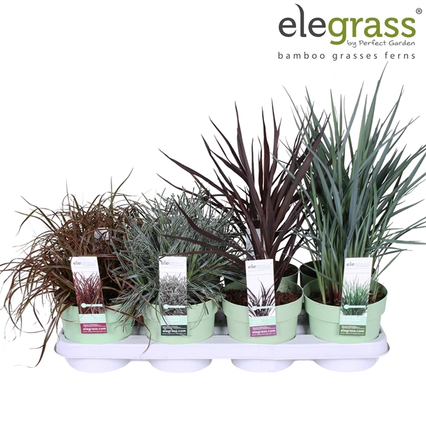 <h4>Grassen mix tray - Elegrass Patio</h4>
