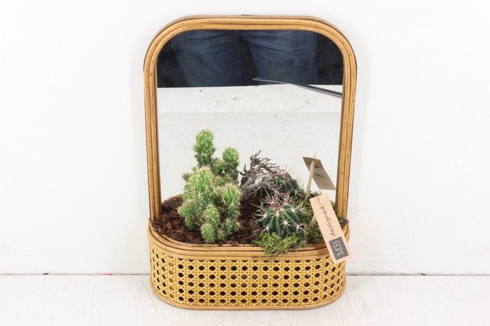 <h4>arr. MB - Cactus met spiegel</h4>
