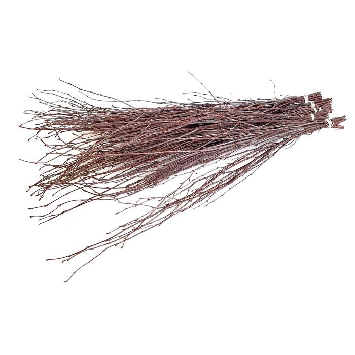 <h4>Birch 120cm 5stems per bunch natural</h4>