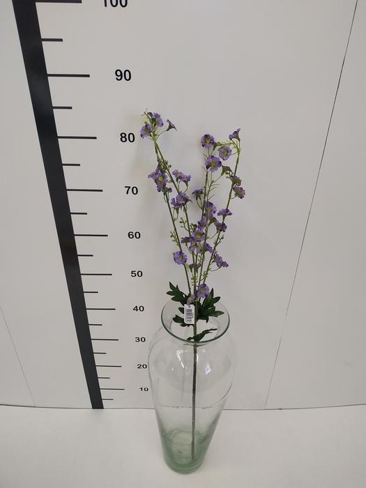 <h4>Haste gipsofila lila</h4>