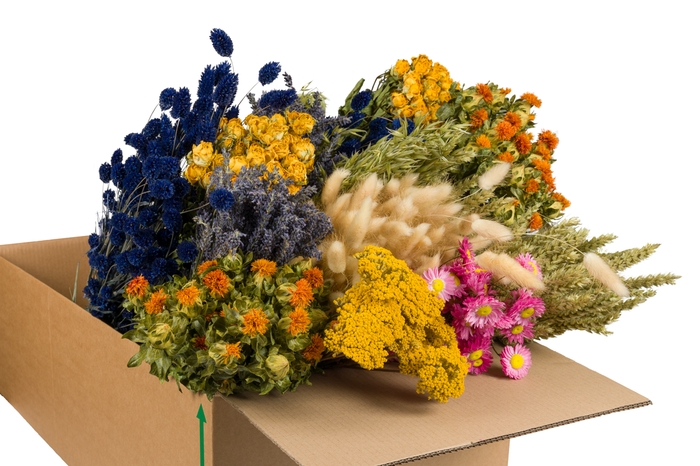<h4>DRIED FLOWERS MIX IN BOX MULTI</h4>