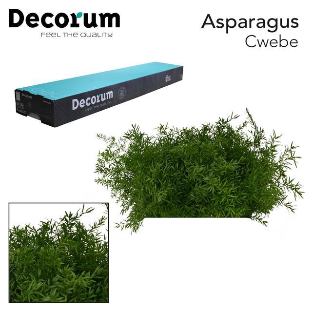 <h4>ASP cwebe 40cm box dc</h4>