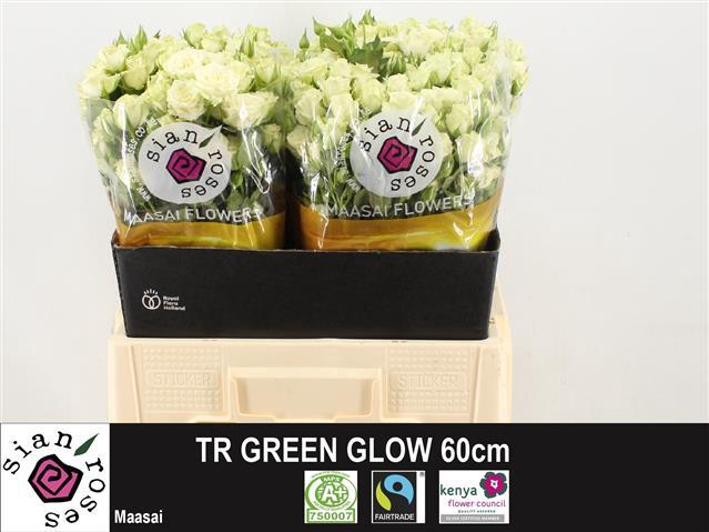 <h4>R TR GREEN GLOW</h4>