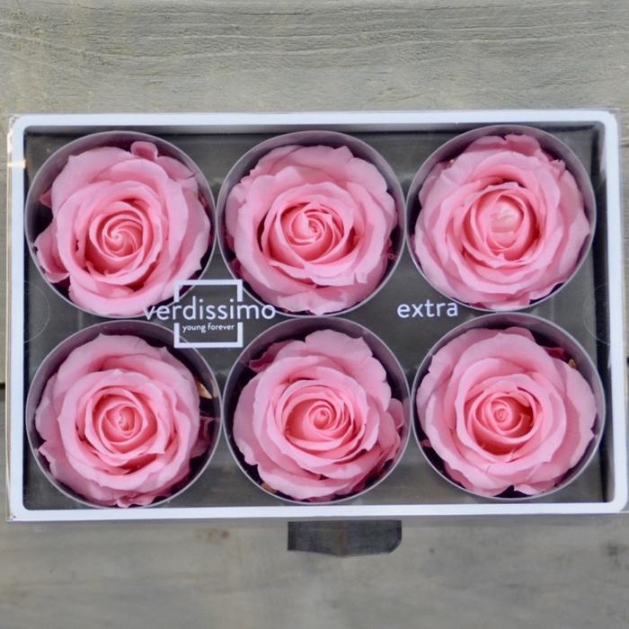<h4>R PR M Bridal Pink</h4>