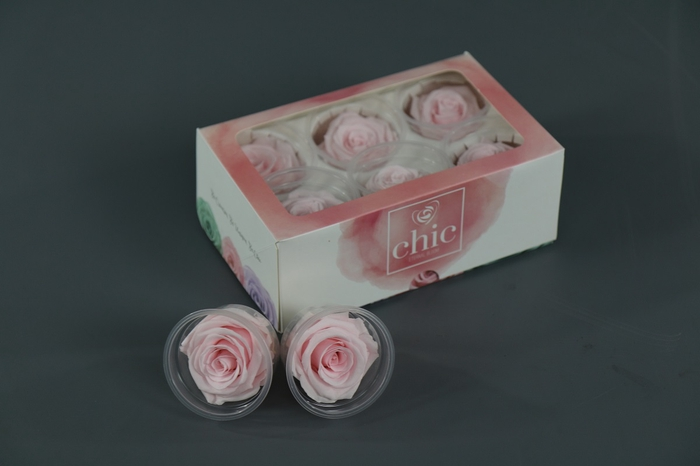 <h4>Rosa Preserved Baby Pink</h4>