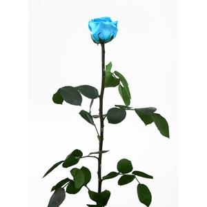 Roos op steel standard Turquoise